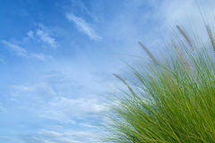 Green grass with blue sky as background texture Royalty Free Stock Images