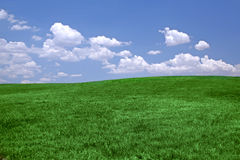 Green grass and blue sky backg Royalty Free Stock Image