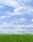Green grass blue sky background. Green grass on blue sky background stock photography