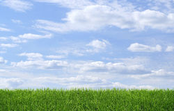 Green grass blue sky background. Wide green grass on blue sky background stock images