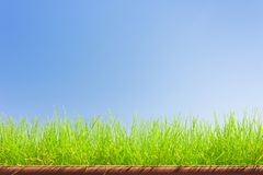 Green grass on blue sky background Royalty Free Stock Photos