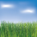 Green grass on the blue sky background Stock Images