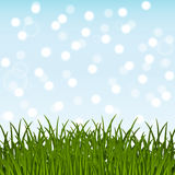 Green grass on blue sky Royalty Free Stock Photography