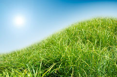 Green grass and blue sky background. Royalty Free Stock Photo