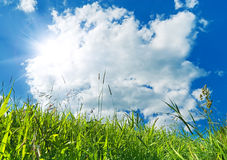 Green grass and blue sky background Royalty Free Stock Photography