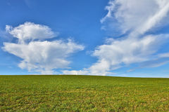 Green grass with blue sky background Royalty Free Stock Image