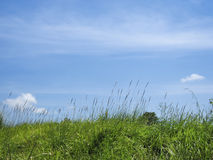 Green grass blue sky nature background Stock Photos