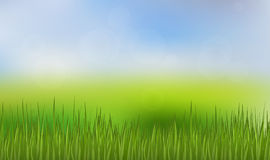 Green Grass and Blue Sky Background. Happy Summer Nature Illustration. Spring nature background with grass and blue sky in the back Stock Photo