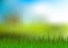 Green Grass and Blue Sky Background. Happy Summer Nature Illustration. Spring nature background with grass and blue sky in the back Royalty Free Stock Photography