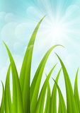 Green grass on blue sky background Stock Photography