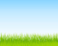 Green grass and blue sky background. Spring nature background. For Your design. Vector vector illustration