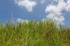 Green grass and blue sky. With cloud Stock Image