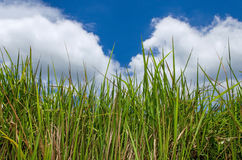 Green grass and blue sky. With cloud Stock Photo