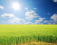 Green grass blue sky Stock Images