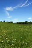 Green grass blue sky with clouds Royalty Free Stock Photo