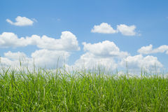 Green grass and blue sky with clouds. Green grass and blue sky Royalty Free Stock Photography