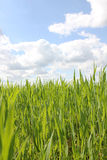 Green grass and blue sky with clouds Stock Image