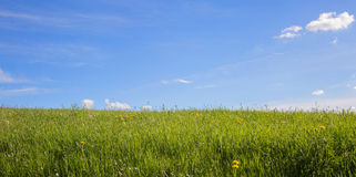 Green Grass and blue sky with clouds. Fresh green grass in springtime and beautiful blue sky with clouds Royalty Free Stock Images