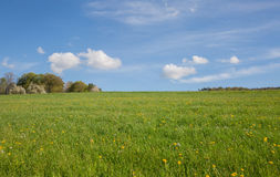 Green Grass and blue sky with clouds Royalty Free Stock Photos