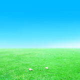 Green grass and blue sky  and fall Stock Photos