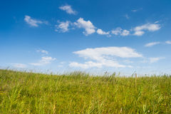 Green grass and blue sky. Field with blue sky and white clouds on background stock photography