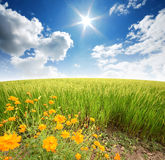 Green grass blue sky. Flower stock photos