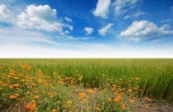 Green grass blue sky. Flower stock image