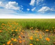 Green grass blue sky. Flower stock images