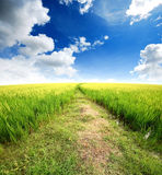 Green grass blue sky. Flower royalty free stock photography