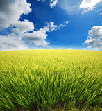 Green grass blue sky. Flower royalty free stock photos