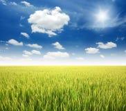 Green grass blue sky. Flower royalty free stock photo