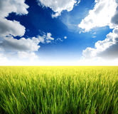 Green grass blue sky. Flower Stock Photos
