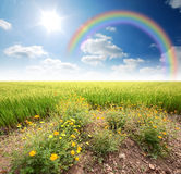 Green grass blue sky. Flower royalty free stock images
