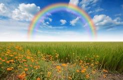 Green grass blue sky. Flower stock photo