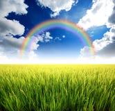 Green grass blue sky. Flower rainbow royalty free stock photography