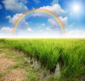 Green grass blue sky. Flower rainbow stock photo