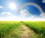 Green grass blue sky. Flower rainbow stock photography