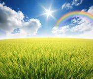 Green grass blue sky. Flower rainbow royalty free stock image