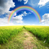 Green grass blue sky. Flower rainbow Stock Photo