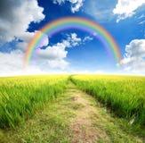 Green grass blue sky Stock Photo