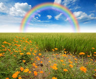 Green grass blue sky. Flower rainbow Royalty Free Stock Photos