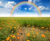 Green grass blue sky. Flower rainbow royalty free stock photos