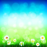 Green grass and blue sky with flowers vector. Green grass, blue sky bokeh and flowers photo realistic vector background Stock Image