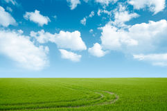 Green grass and blue sky landscape Royalty Free Stock Photography