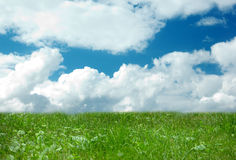 Green grass and blue sky with large clouds Royalty Free Stock Image