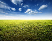 Green grass blue sky Stock Image