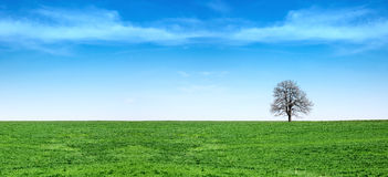 Green grass and blue sky panorama Royalty Free Stock Image