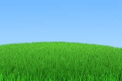 Green grass with blue sky. Green grass with a blue sky and space for text or image, 3d rendering Royalty Free Stock Image