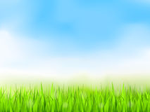 Green Grass and Blue Sky. Summer background Stock Images