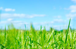 Green grass and blue sky. Green grass and blue summer sky with clouds Stock Photo